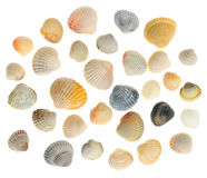 Cockleshells set Stock Images