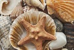 Cockleshells & starfish Стоковые Фотографии RF