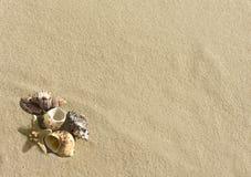 Cockleshells and starfish lie on sand Stock Photo