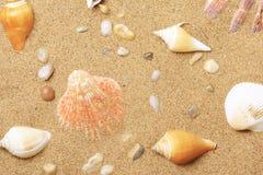 Cockleshells and a starfish lie on seacoast Stock Image