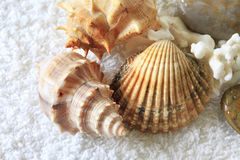 Cockleshells on a towel Royalty Free Stock Photos