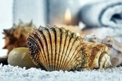 Cockleshells on a towel Stock Photography