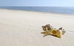 Cockleshells und Starfish liegen an Land Lizenzfreie Stockfotos
