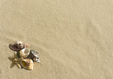 Cockleshells und Starfishlüge auf Sand Stockfoto