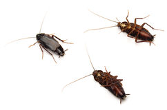 Cockroach Stock Image