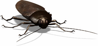 Cockroach. Nobody loves this symbol for bugs and nasty things Stock Photos