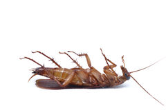 Cockroach Stock Images