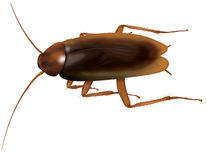 Cockroach. Realistic illustration of a cockroach Royalty Free Stock Photography