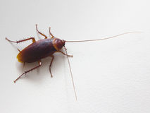 Cockroach Stock Photos