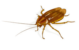 Cockroach. Illustration on white background Royalty Free Stock Photography