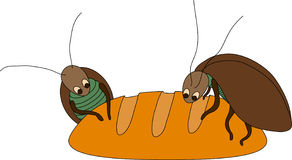 Cockroach on the bread Stock Images