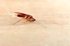 Cockroach ,bug Stock Photo