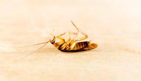 Cockroach ,bug Stock Image