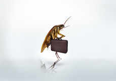 Cockroach business briefcase ,whitebackground. Cockroach  business briefcase go to work  with white background Royalty Free Stock Photography