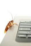 Cockroach climbing on keyboard Stock Image