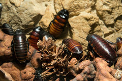 Cockroach close up Stock Photo