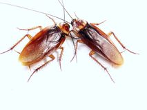 Cockroach conversation. Royalty Free Stock Image