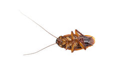 Cockroach dead Stock Images