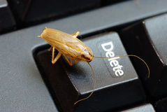 Cockroach delete idea Stock Images