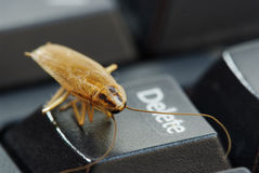Cockroach delete idea Stock Photography