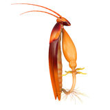 Cockroach digestive system Stock Photo