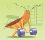 Cockroach with dumbbell. Cockroach lifting dumbbell in sport Stock Photos
