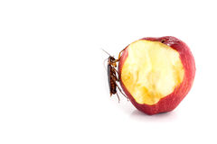 Cockroach eating on a red apple (focus on cockroach). Image iso. Lated on white, studio background stock images