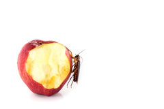 Cockroach  eating on a red apple (focus on cockroach). Image iso Stock Photo