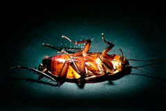 Cockroach extermination concept Stock Image