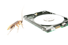 Cockroach and hard disk drive Royalty Free Stock Photos