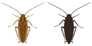 Cockroach icon and silhouette on a white background. Vector illustration. Stock Photo