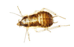 Cockroach insect molt stock photography