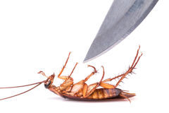 Cockroach and knife isolated on a white background : Killing coc Stock Photography