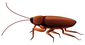 Cockroach On White Background Royalty Free Stock Image