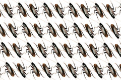 Cockroach pattern infestation concept background Royalty Free Stock Photo