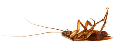 Cockroach profile isolated Stock Photos