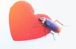 Cockroach with red hearth,annoyed love concept