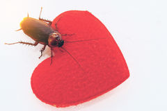 A cockroach with red hearth,annoyed or ugly love concept