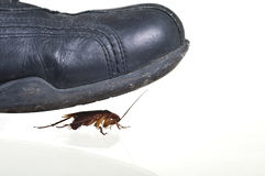 Cockroach running for his life. Cockroach just a moment before being killed by a blackshoe on white background Stock Photo