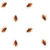 Cockroach seamless pattern Royalty Free Stock Photography