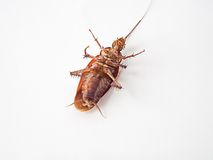 Cockroach supine on a white background. Stock Photo
