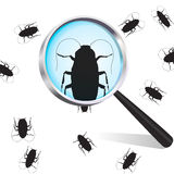 Cockroach. Under the supervision of a magnifying glass Stock Photos