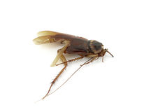 Cockroach was trampled to death Stock Images