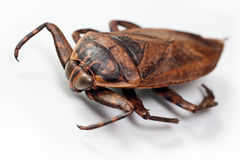 Cockroach on white Stock Photo
