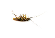 Cockroach on white background Stock Images