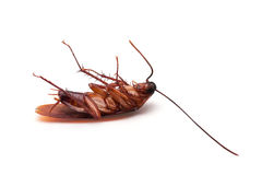 Cockroach. On a white background stock images