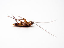 Cockroaches carry diseases that you have to eliminate. Stock Images