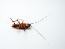 Cockroaches carry diseases that you have to eliminate. Stock Photo