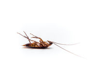 Cockroaches carry diseases that you have to eliminate. Royalty Free Stock Images