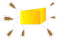 Cockroaches and cheese. On white background Royalty Free Stock Photo
